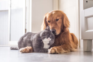 dog and cat loving