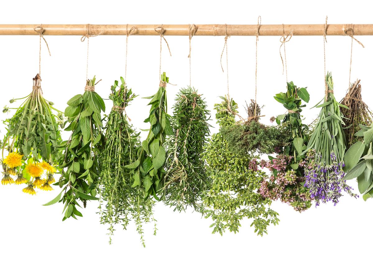 6 Amazing Herbs for Wellness, Healing, and Longevity